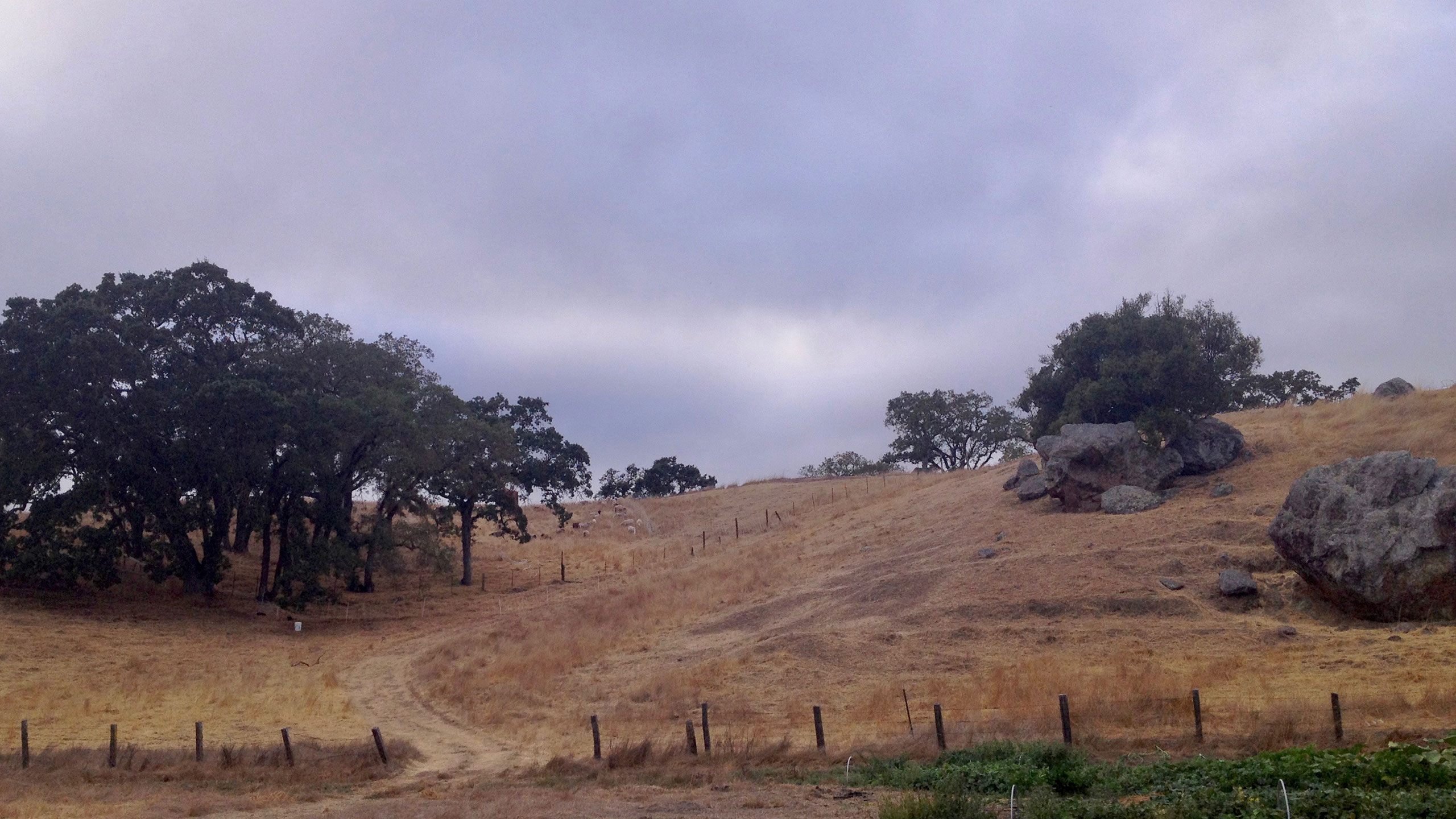 Modern-House-Design-Marin-County-Haybales-view-of-nature